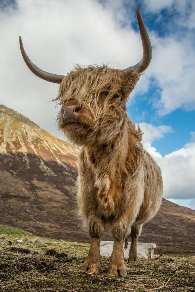 Tours in Scotland