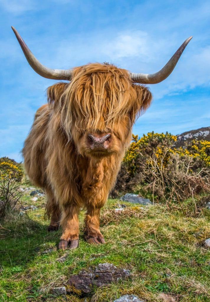 Edinburgh to the Isle of Skye